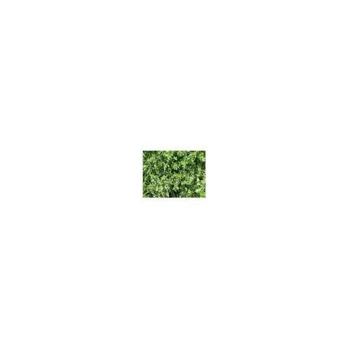 Armoise 30g - Artemisia Vulgaris - plante en vrac