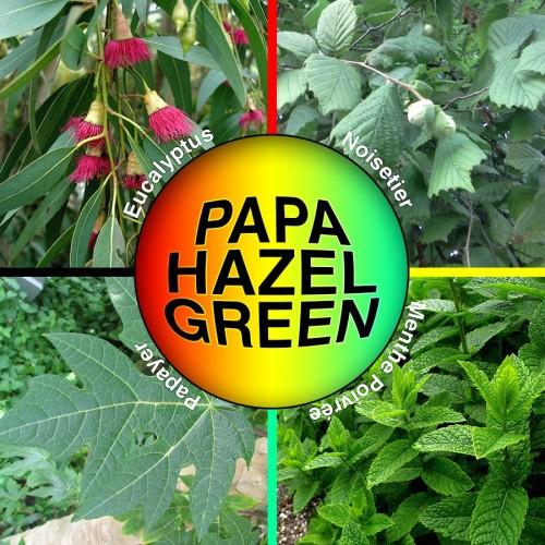 Papa Hazel Green 30g - Mix de plantes à vaporiser / diffuser - Mix du Gringo