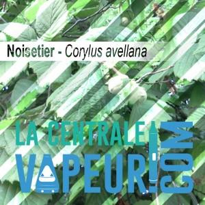 Noisetier en feuille Bio 30g - Feuilles en vrac