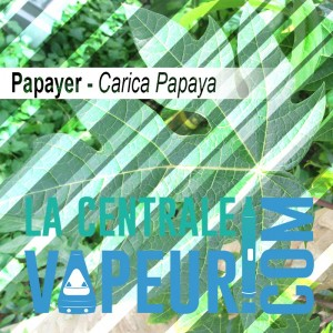 Papayer en feuille Bio - 30g
