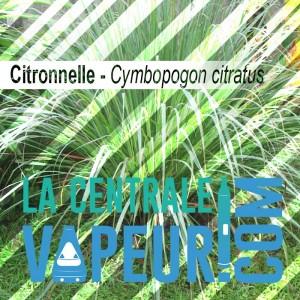 Citronnelle - 30g