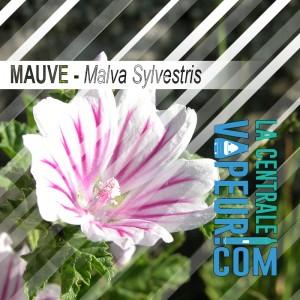 Mauve 30 grammes - Malva Sylvestris