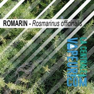 Romarin - 30g