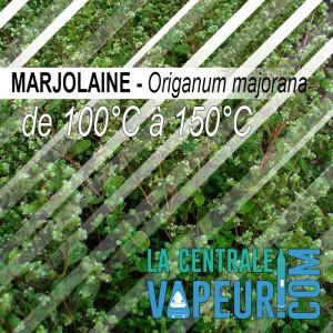 Marjolaine - 30g
