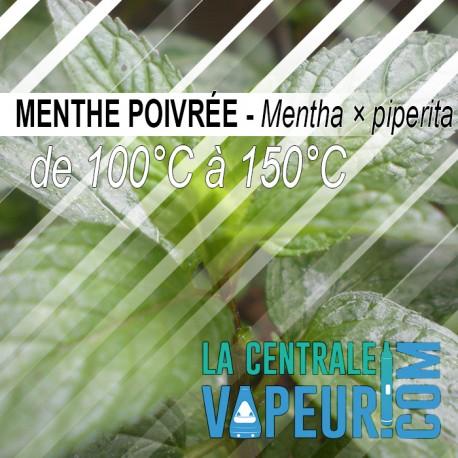 Menthe Poivrée - 30g