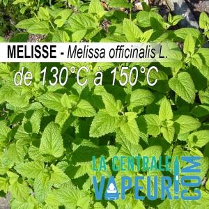 Mélisse - 30g
