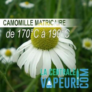Camomille Matricaire Bio - 30g