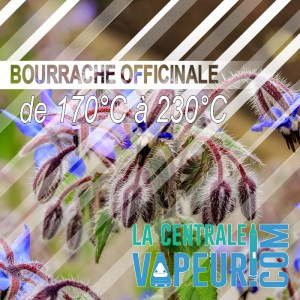 Bourrache - 30 grammes - Borago Officinalis