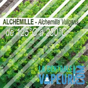 Alchemille - 30g